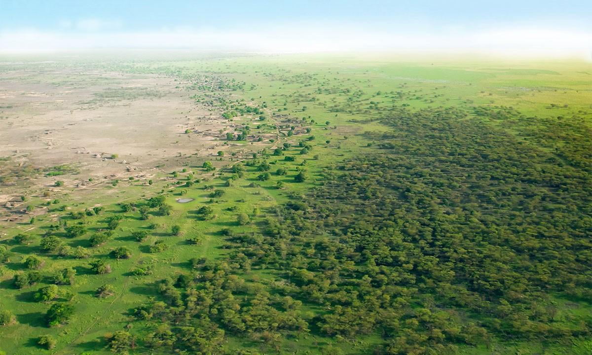 Timberland посадит 50 миллионов деревьев в ближайшие 5 лет